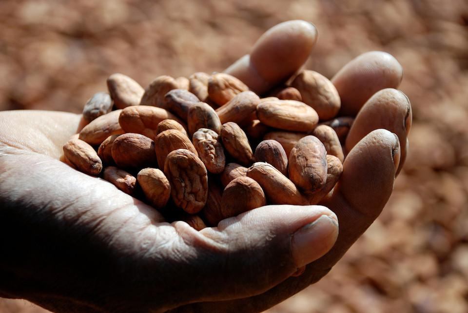 おいしいチョコレートと熱帯の森をつくる取り組み