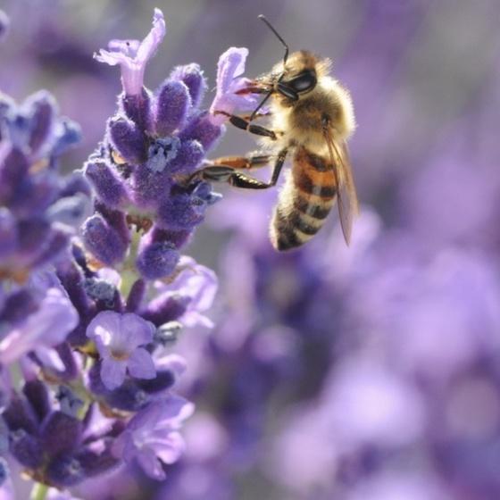 ミツバチの暮らしを支えて女性たちの仕事を支える